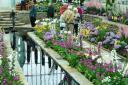Sunken garden spring show